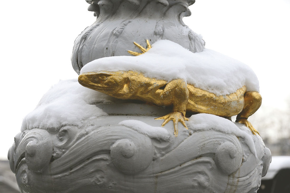 Salamander Snow 1
