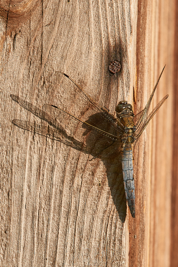 Blog 21 02 26 Dragonfly