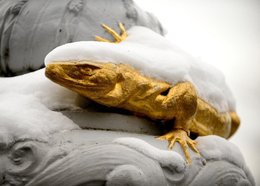 Salamander Snow 2